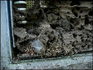 Asseln Im Garten : kraut r ben forum ameisenbau mit telefonanschlu ~ Lizthompson.info Haus und Dekorationen
