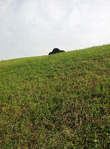 Grass Hill And A Rock Free Stock Photo