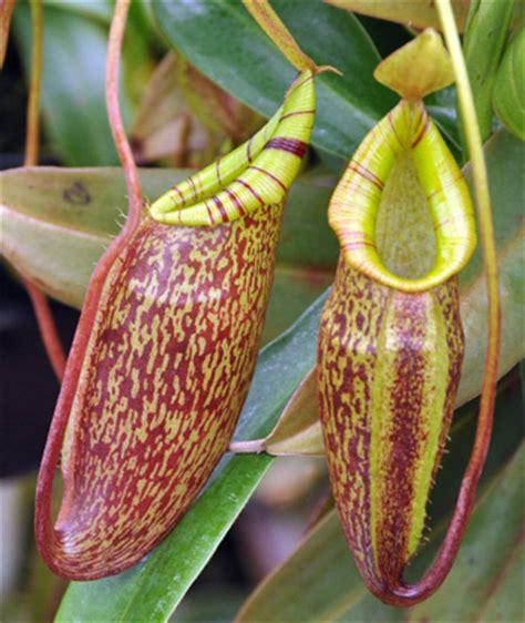 beautiful carnivorous plants for sale