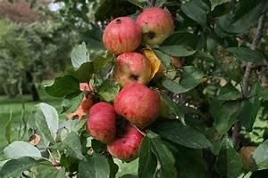 Tuer Un Arbre Avec De L Acide : plantez un arbre fruitier ~ Dailycaller-alerts.com Idées de Décoration