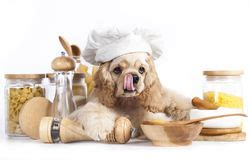 puppies  chefs hat stock image image  delicious