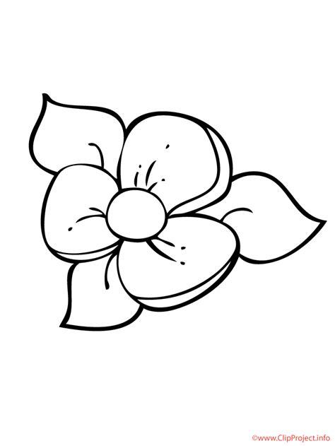 flor dibujo  colorear gratis