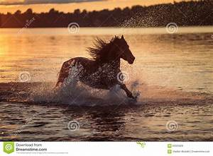 Black Horse Running In Water At Sunset Stock Image - Image ...