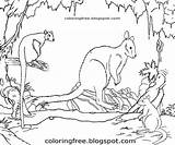 Australian Colouring Printable Wildlife Marsupial Coloring Animals Outback Drawing Tree Rainforest Clipart Creatures Kangaroo Colour Wallaby Realistic Complex Pademelon Discovery sketch template