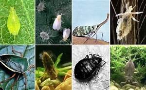 Schädlinge Zimmerpflanzen Klebrige Blätter : sch dlinge pflanzen gesund erhalten zimmerpflanzen ~ Lizthompson.info Haus und Dekorationen