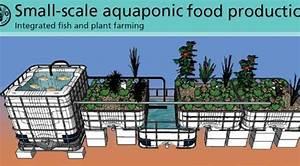 Review  United Nations Aquaponics Manual