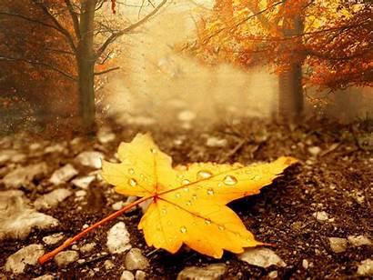 Season Fall Autumn Wall Web Magnificent Wallpapertag