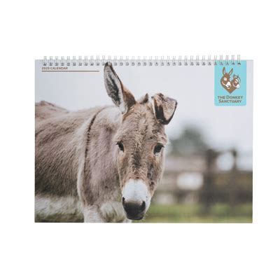 donkey sanctuary slimline calendar donkey sanctuary shop