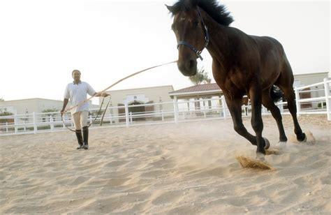 careers  animals horse trainer