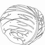 Cabbage Coloring Pages Patch Getdrawings sketch template