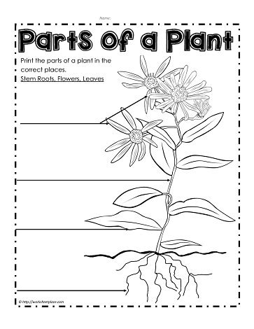 Plants Worksheets Label The Parts Of A Plant Worksheets