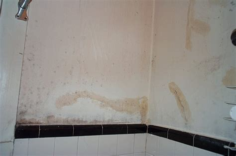 mold on bathroom walls home design