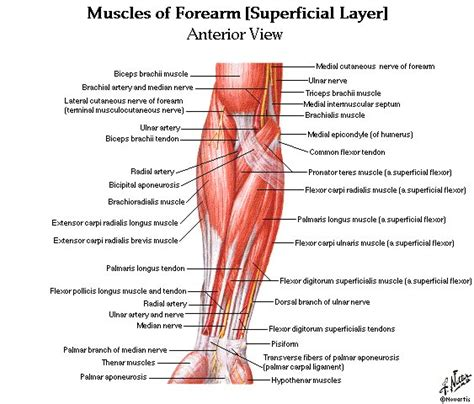 They are shown in the illustration below. Tennis-Induced Wrist Pain - Every Injury Is An Opportunity ...