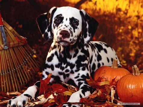 cute dogs alert pics   happy thanksgiving cheer