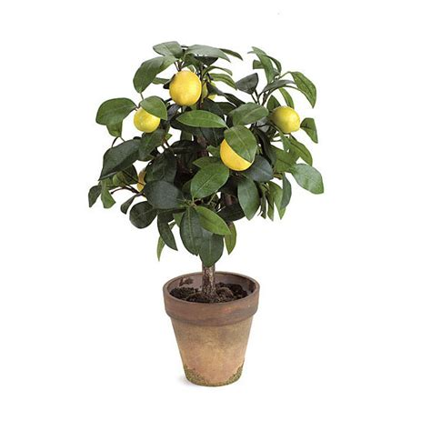 18 inch lemon topiary in terra cotta pot overstock p 0100