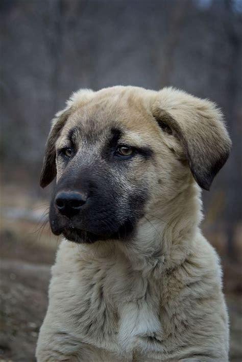 beautiful pets  puppys  pinterest