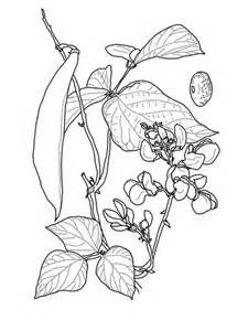 runner bean coloring page supercoloringcom