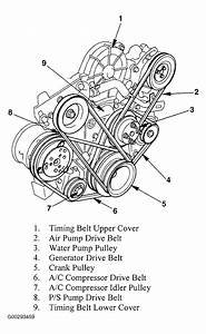 1994 Honda Passport Serpentine Belt Routing And Timing