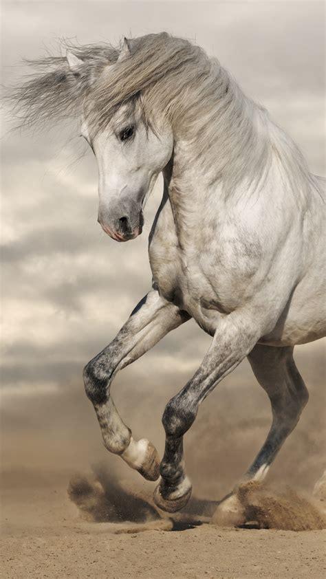 wallpaper horse  animals
