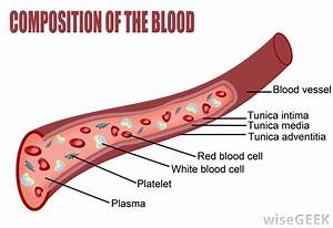 What Is The Difference Between Arteries  Veins  Blood