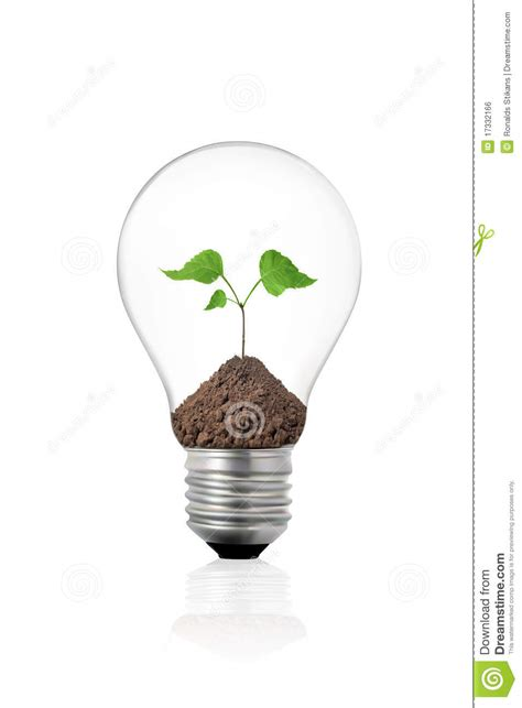 eco concept light bulb with green plant inside royalty