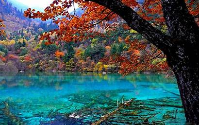 Forest Wallpapers Clear Lake Crystal Tree Oak