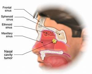 30 Diagram Of Nasal Cavity