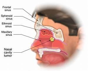 Nasal Cavity Diagram