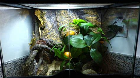 crested gecko exoterra mini natural terrarium setup
