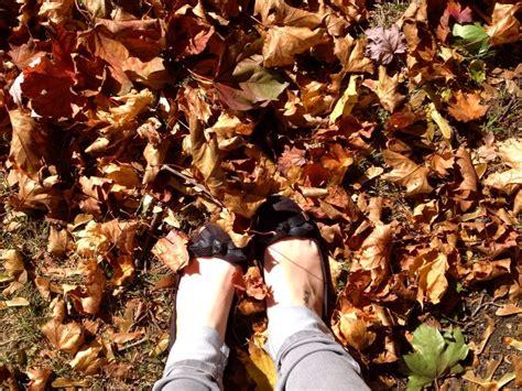 Crunching through the autumn leaves | Autumn leaves, Autumn