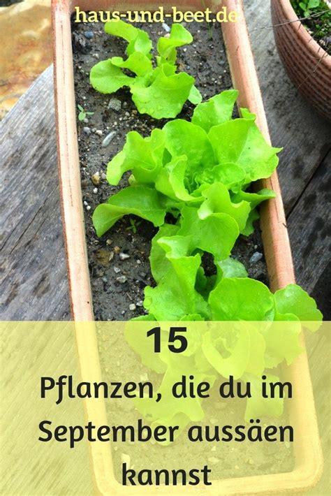 Garten Pflanzen September by Aussaatpl 228 Ne Im September Bereite Dich Auf Den Winter Vor
