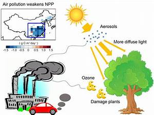Ozone And Haze Pollution Weakens Land Carbon Uptake In China