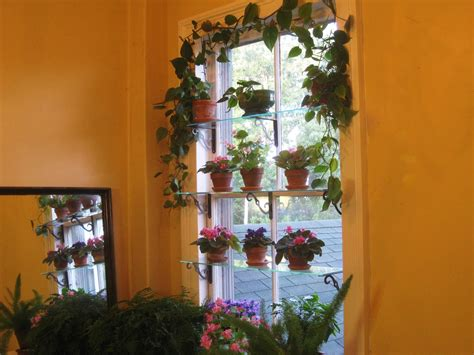 window garden shelves shelf plants glass plant indoor sill windows wire herb indoors steps put across making 1224 supports agardenforthehouse
