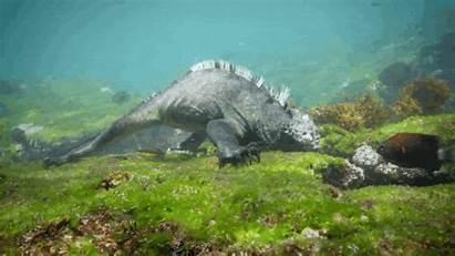 Lizard Godzilla Monster Giant Swimming Ocean Lizards
