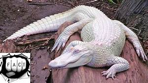 Top 10 Rarest Albino Animals In The World - YouTube