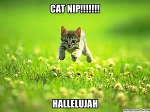 cat nip cat nip