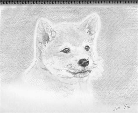 Shiba Dog  Ee  Puppy Ee   Pencil Sketch By Theblindalley On Deviantart