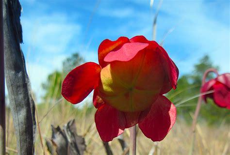 identify florida wildflowers florida hikes