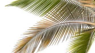 badezimmer umbau palmen richtig düngen und pflegen tipps für die zimmerpalme