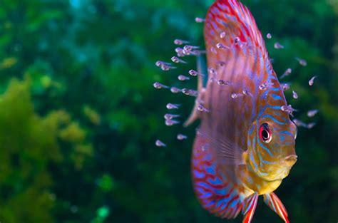 discus poisson s