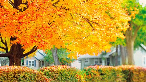 planting in fall plants for fall color