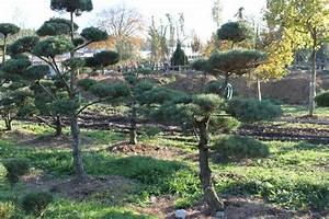 oberpfalz bonsai garten punzmann gmbh menzlhof With whirlpool garten mit freiland bonsai bäume