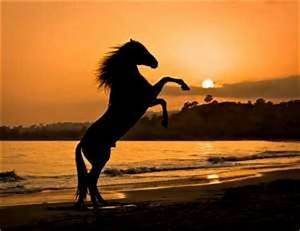 Wild Horse running on a North Carolina Beach | Horses ...