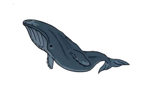 draw  whale  pictures wikihow