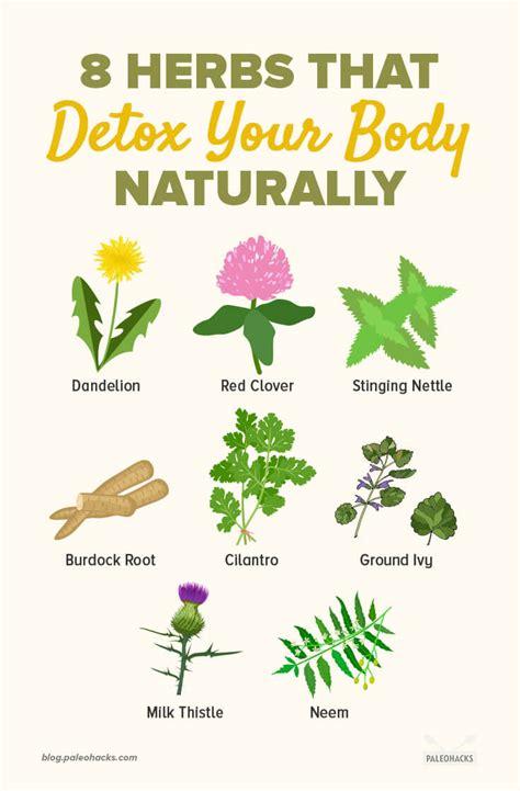 detox  body naturally  herbs thatll   trick