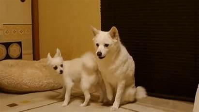 Dogs Dog Funny Grumpy He Huffingtonpost Animals