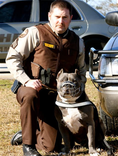 pitbull dog pictures images    american
