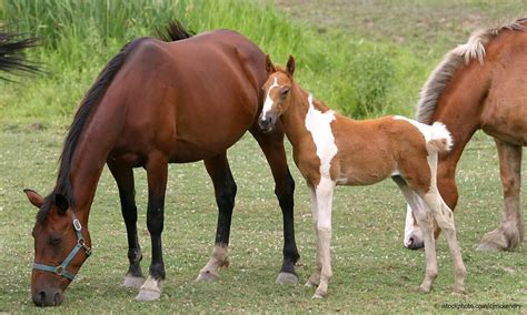 horses history domestication equine