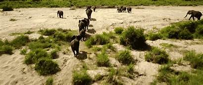 Drone South Africa Footage Lion King Looks