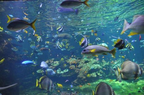 aquarium boulogne sur mer aquarium nausicaa boulogne sur mer